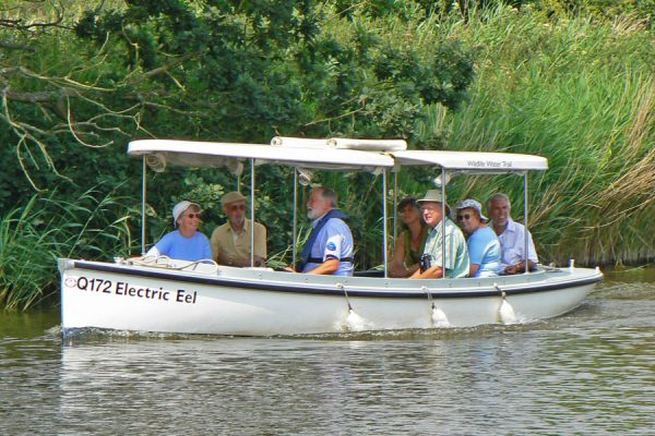 Electric eel boat trip