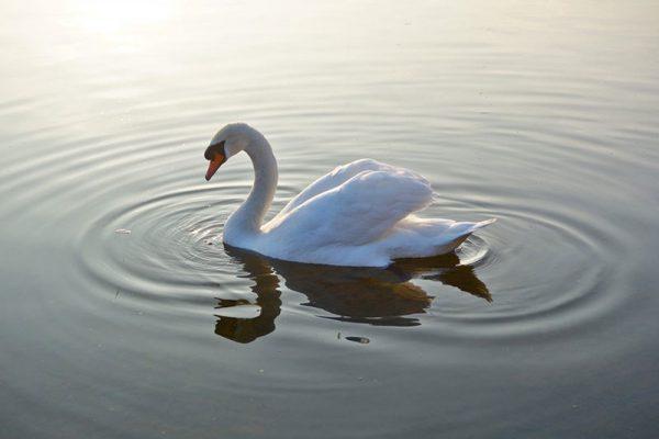 Norfolk Broads wildlife