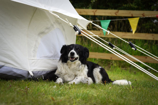 Bell tent dog friendly